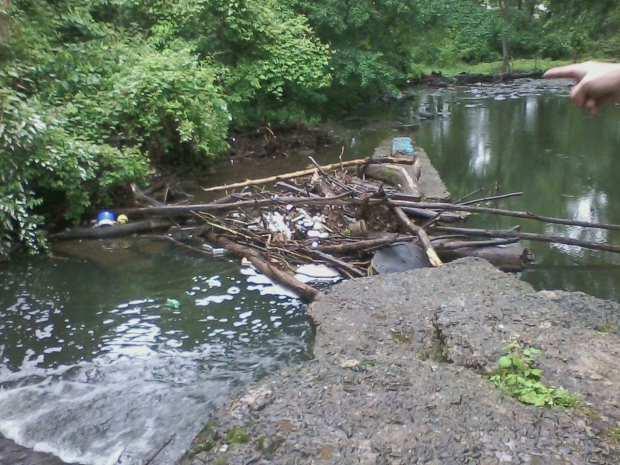 Poquessing Creek #3 5-29-17