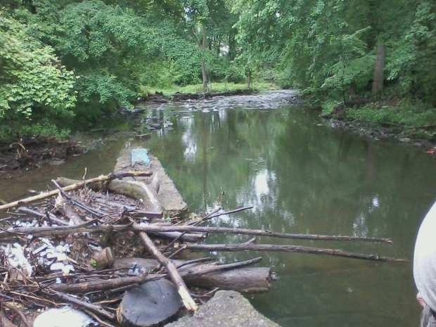 Poquessing Creek #5 5-29-17