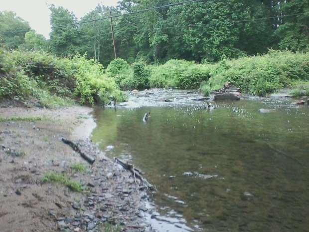 Poquessing Creek #7 5-29-17