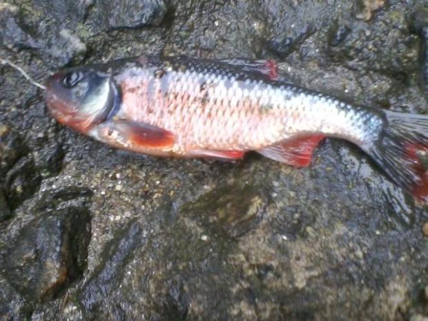 Poquessing Creek #9 5-29-17